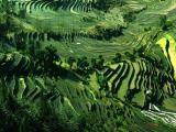 8 days Minority and Natural Scenery Tour in Guizhou Province pictures