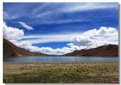 6 day tour to Lhasa with Yamdrok Lake pictures