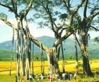 8 Days Tour to Kunming-Xishuangbanna-Dali-Lijiang pictures