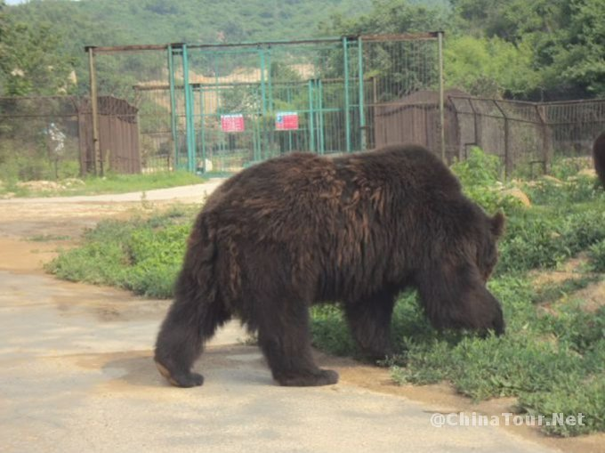 Badaling Wildlife World