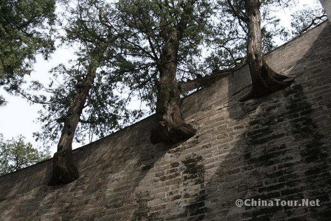 As in other Ming tombs, trees grow from the sides of the stairs leading up to the Soul Tower. It is unclear how this was accomplished.